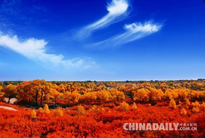 金秋十月,内蒙古额济纳旗胡杨绽放.(图片来源:月光李常辉)